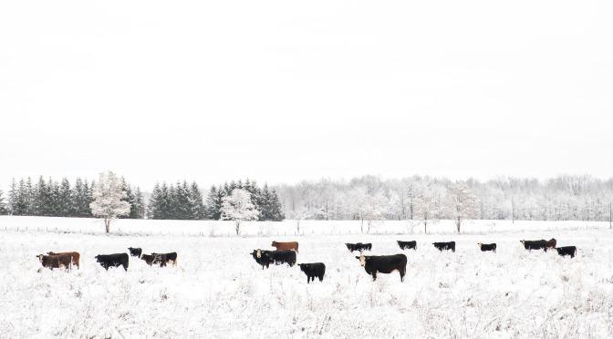 Tedesco idiomatico: Die Kuh vom Eis holen